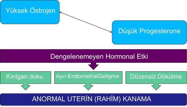 disfonksiyonel uterin kanam grafik Prof. Dr. Süleyman Engin Akhan